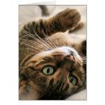 Gatito manchado Brown lindo del gato de Bengala qu Felicitación