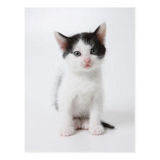 Gatito manchado negro tarjeta postal