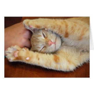 Gatito mimoso tarjeta pequeña