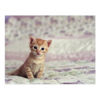 Gatito minúsculo del jengibre postal
