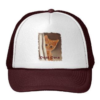 Gatito mullido del jengibre detrás del gorra de la