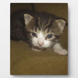 Gatito muy lindo placas