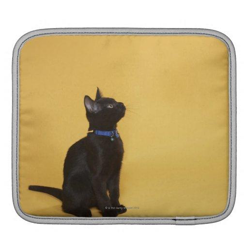 Gatito negro en cuello fundas para iPads