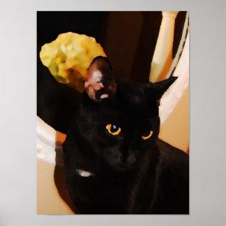Gatito negro poster