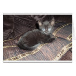 Gatito negro tarjeta