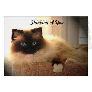 Gatito Notecard de Ragdoll Ragdolls de los gatos d Tarjeta Pequeña