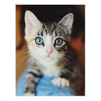 Gatito observado azul brillante tarjeta postal