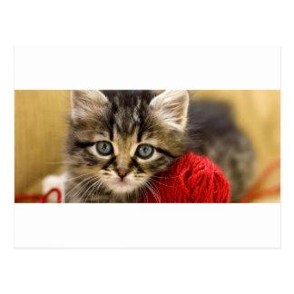 Gatito observado azul curioso con una bola roja postal