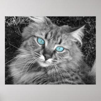 Gatito observado azul hermoso póster