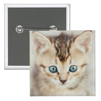 Gatito observado azul pin cuadrado