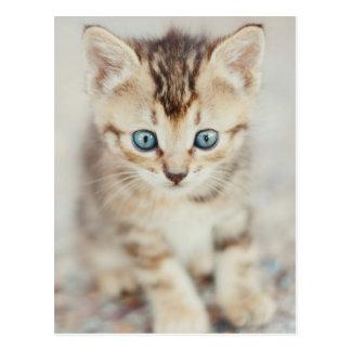 Gatito observado azul tarjeta postal