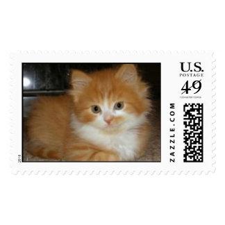 Gatito peludo sellos