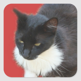 Gatito pensativo pegatina cuadrada