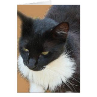 Gatito pensativo tarjeta de felicitación