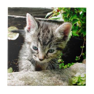 Gatito perdido azulejo cuadrado pequeño