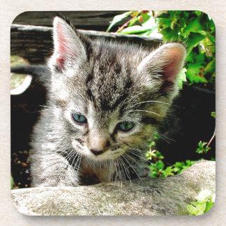 Gatito perdido posavaso