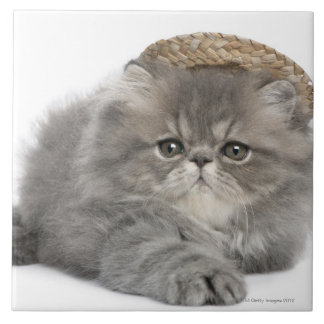 Gatito persa (2 meses) que lleva una paja azulejo cuadrado grande