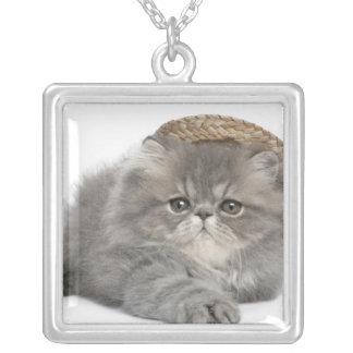 Gatito persa (2 meses) que lleva una paja collar plateado