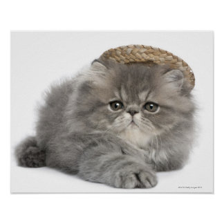 Gatito persa (2 meses) que lleva una paja posters