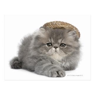 Gatito persa (2 meses) que lleva una paja tarjeta postal