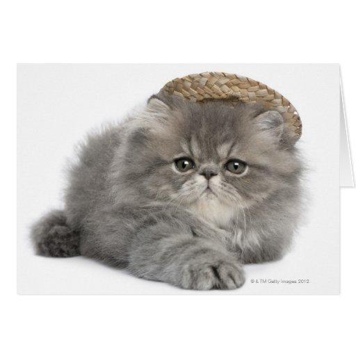 Gatito persa (2 meses) que lleva una paja tarjeton