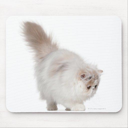 Gatito persa (3 meses) alfombrillas de ratón