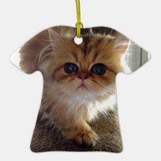 Gatito persa asustado ornatos