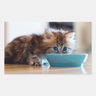 Gatito persa joven con los ojos azules pegatina rectangular