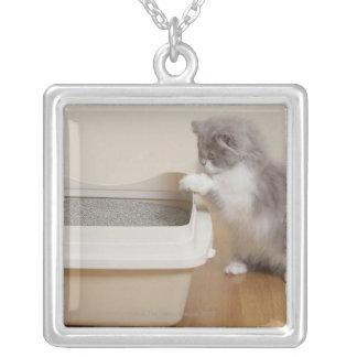 Gatito persa que mira la caja de arena collar plateado