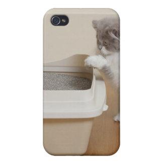 Gatito persa que mira la caja de arena iPhone 4 fundas