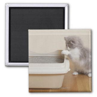 Gatito persa que mira la caja de arena imán cuadrado
