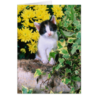 Gatito precioso 32 tarjeta de felicitación
