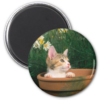 Gatito precioso 54 imán redondo 5 cm