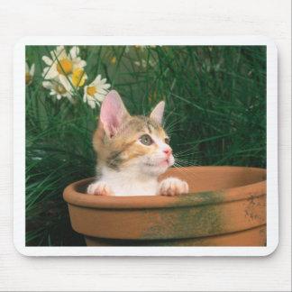 Gatito precioso 54 tapete de ratón