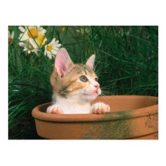 Gatito precioso 54 postal