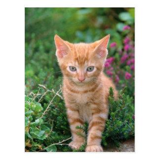 Gatito precioso 7 tarjetas postales