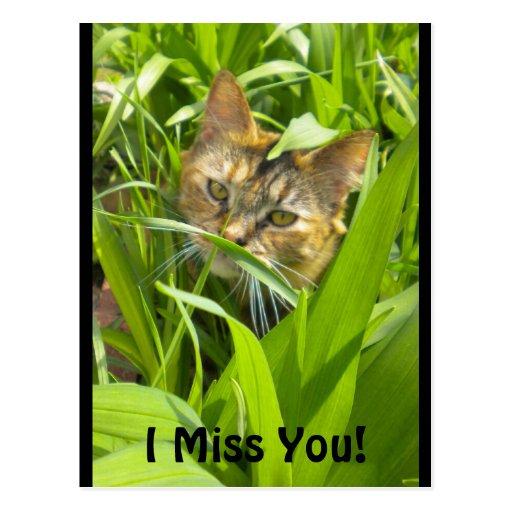"Gatito precioso de la selva ""que le falta"" postal"