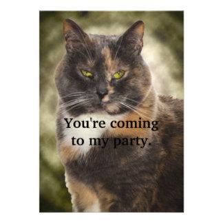 ¿Gatito presumido - qué usted quieren? Comunicado