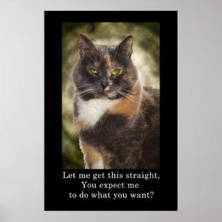 ¿Gatito presumido - qué usted quieren? Póster