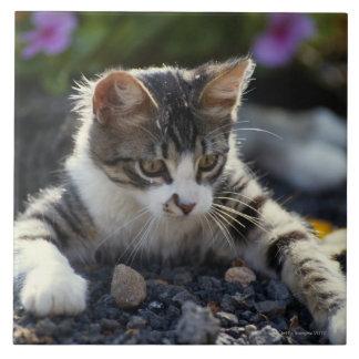 Gatito, primer azulejo cuadrado grande