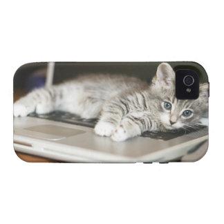 Gatito que descansa sobre el ordenador portátil vibe iPhone 4 fundas