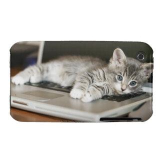 Gatito que descansa sobre el ordenador portátil iPhone 3 cobertura