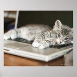 Gatito que descansa sobre el ordenador portátil poster