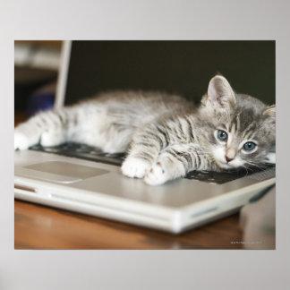 Gatito que descansa sobre el ordenador portátil póster