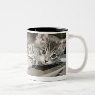 Gatito que descansa sobre el ordenador portátil taza de café