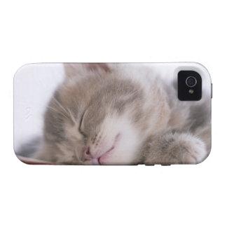 Gatito que duerme en el cuenco 2 Case-Mate iPhone 4 carcasa