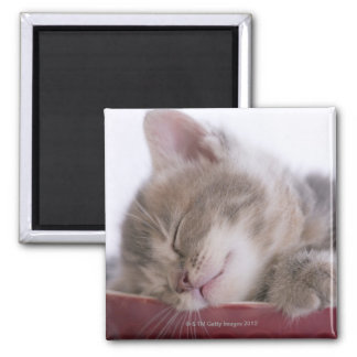 Gatito que duerme en el cuenco 2 imanes