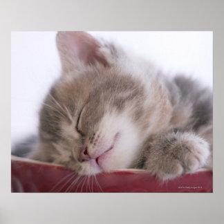 Gatito que duerme en el cuenco 2 impresiones