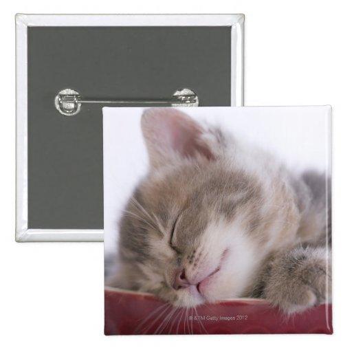 Gatito que duerme en el cuenco 2 pins