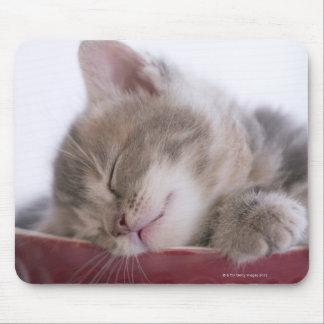 Gatito que duerme en el cuenco 2 tapetes de raton